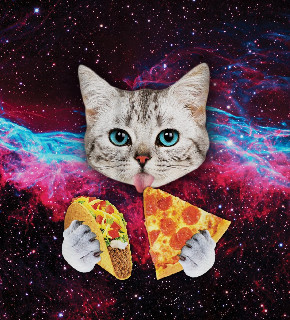 Galaxy Space Kitten Cat Eat Taco Pizza Funny