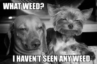 whatweed