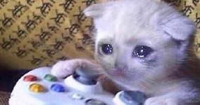 sad cat xbox player left