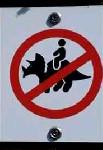 no riding dinosaur
