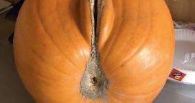 Halloween pumpkin vagina