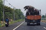 thailand trex