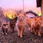 cats walk away fire background
