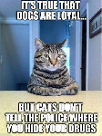 cats are more loyal than dogs